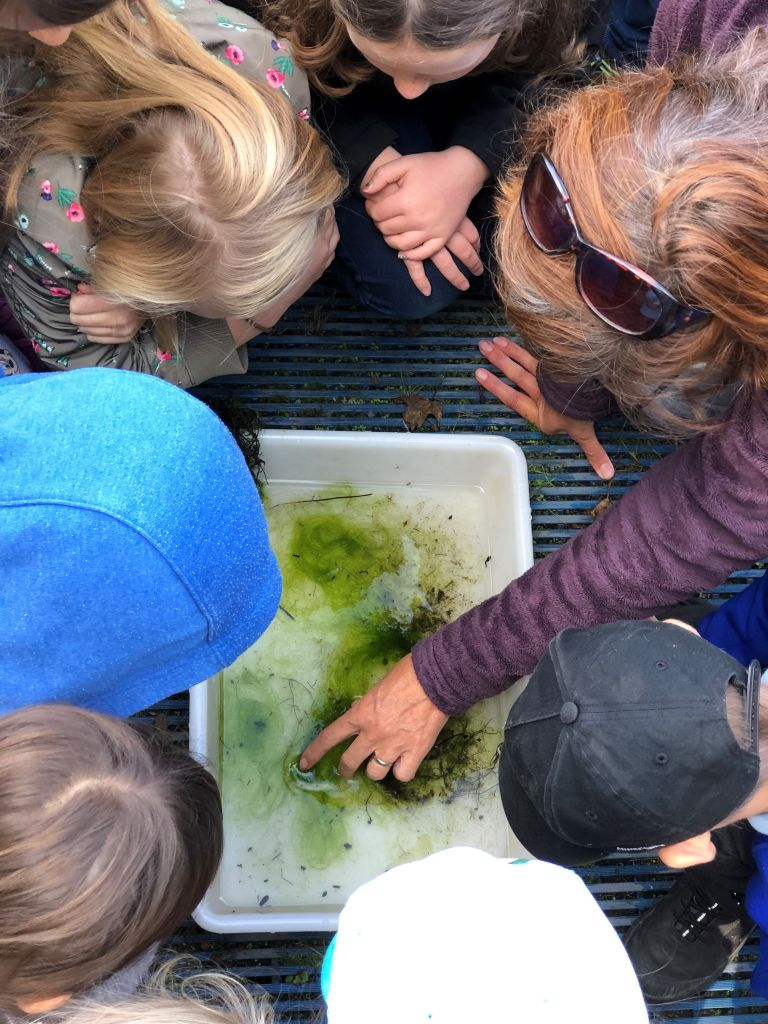 Children looking at what creatures have been found in the pond