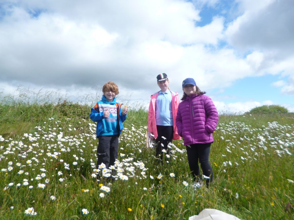 pupils in the meadow